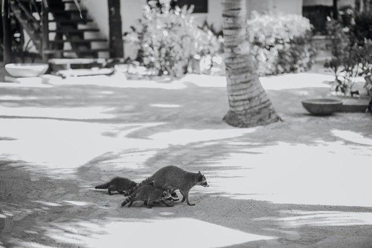 0000 168 - Golfinhos, pássaros e raias retornam à zona hoteleira de Holbox, no México. A natureza comemora a ausência do homem!