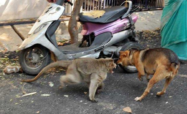 monkey2 - Macaco adotou cachorrinho como se fosse seu filho e nos dá uma lição de vida