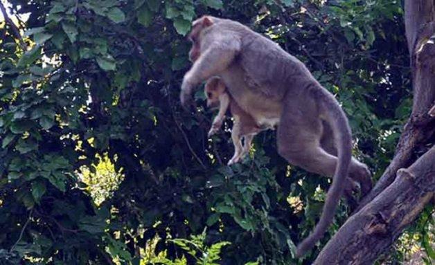 monkey6 - Macaco adotou cachorrinho como se fosse seu filho e nos dá uma lição de vida