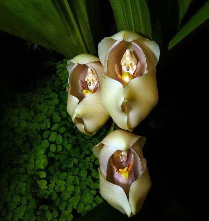 3 - Flores que parecem ter 'bebês dentro' são fantásticas obras da natureza