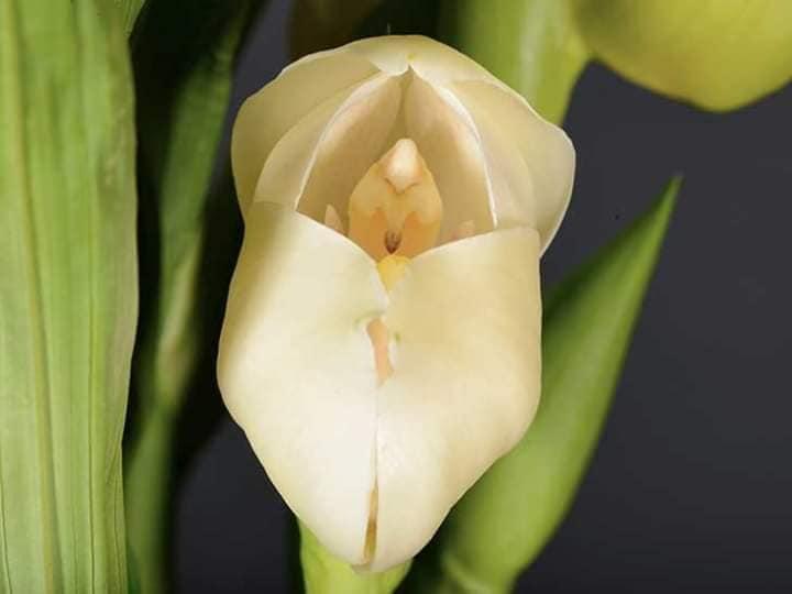4 - Flores que parecem ter 'bebês dentro' são fantásticas obras da natureza