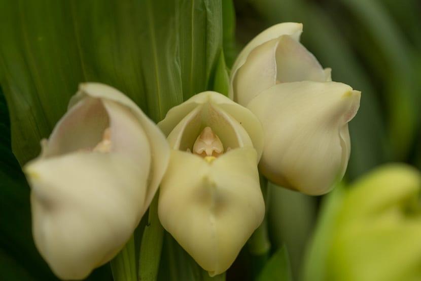 5 - Flores que parecem ter 'bebês dentro' são fantásticas obras da natureza