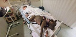 Cachorrinha salva a vida de sua dona 324x160 - Início