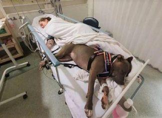 Cachorrinha salva a vida de sua dona 324x235 - Início