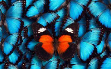 borboletas 356x220 - Início