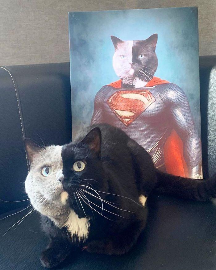 11 - Gato com rosto de cores divididas torna-se pai de gatinhos em cada uma de suas cores