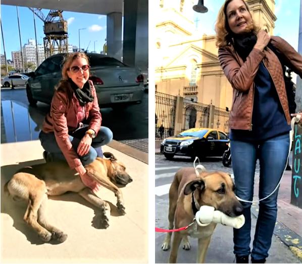 Captura de Tela 365 - Aeromoça adota cãozinho que sempre a esperava na porta do hotel