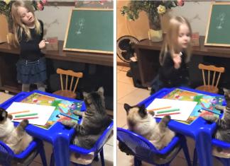 Professora Clarinha e seus gatos 324x235 - Início