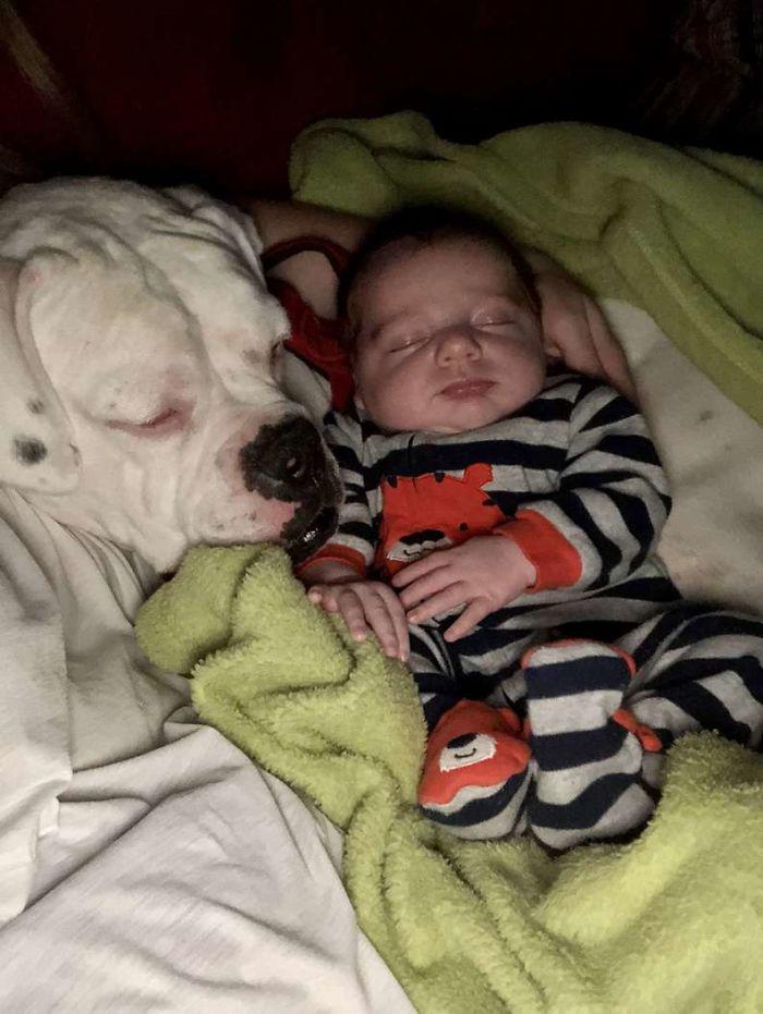 1 4 - Câmera Captura Momento Adorável Garotinho sai de sua cama para dormir com seu cachorro