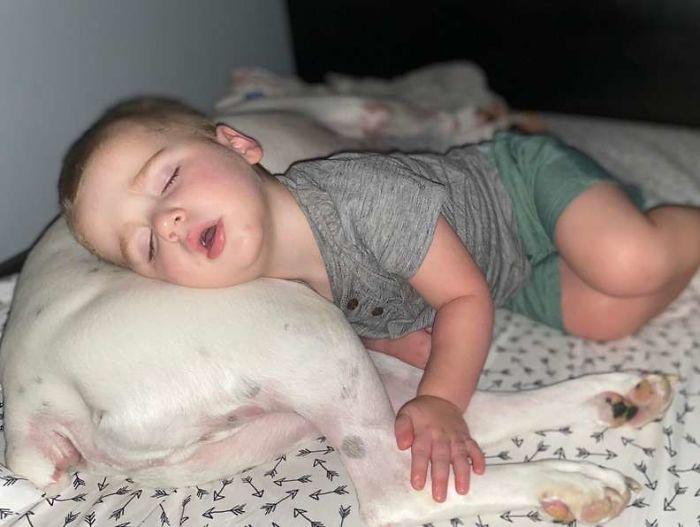 2 5 - Câmera Captura Momento Adorável Garotinho sai de sua cama para dormir com seu cachorro