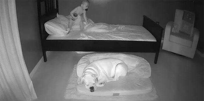 3 5 - Câmera Captura Momento Adorável Garotinho sai de sua cama para dormir com seu cachorro