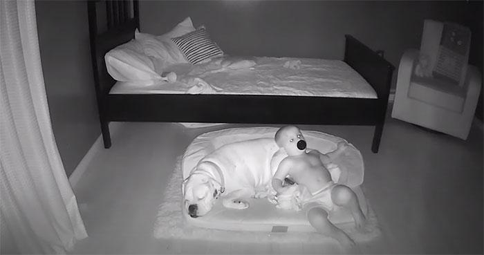 7 1 - Câmera Captura Momento Adorável Garotinho sai de sua cama para dormir com seu cachorro