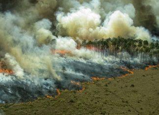 portada amazonas junio incendios forestales 324x235 - Início