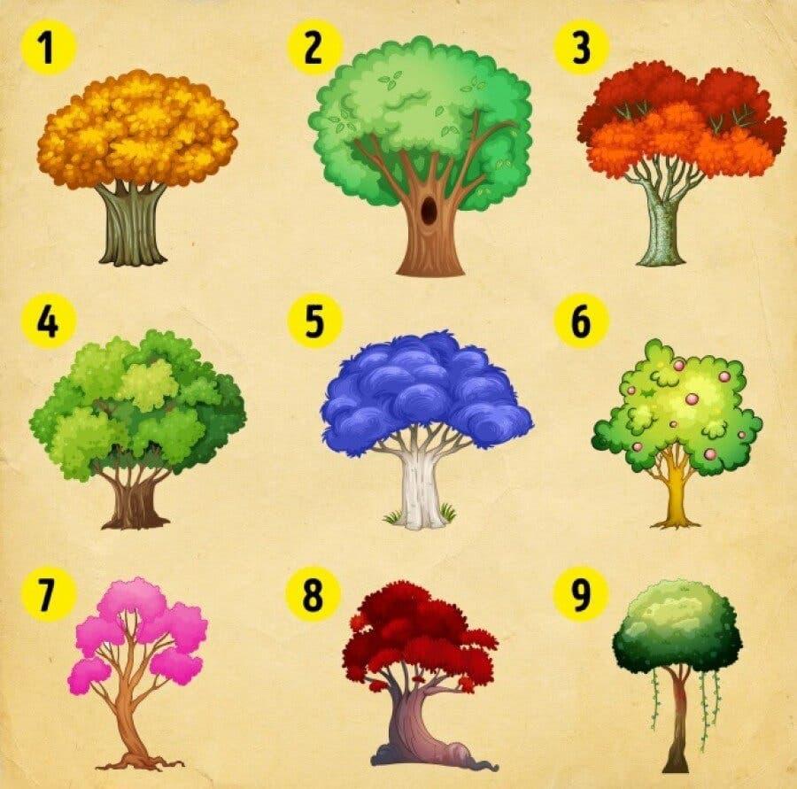 0252468001513347491 big - Escolha uma árvore e descubra as mudanças que você deve esperar