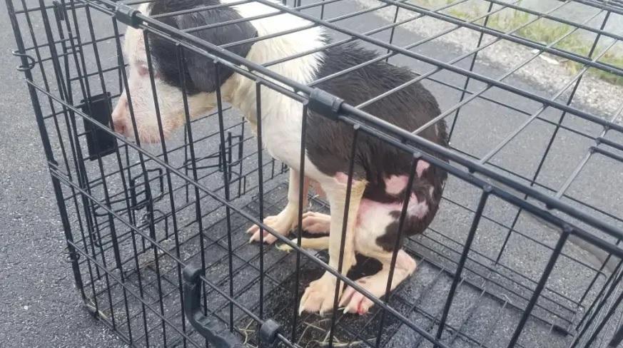 1 1 4 - Pescador resgatou cadelinha presa em uma gaiola no lago
