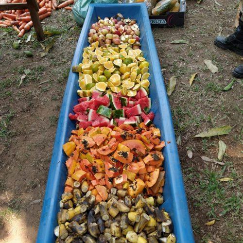 1 1 - Voluntários levam 400 kg de frutas e verduras para alimentar animais famintos no Pantanal