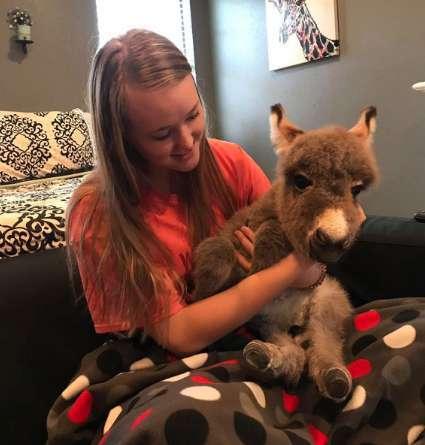"""1564859034 5d45da9aeeaf1 - Uma estudante americana praticamente se tornou uma """"mamãe"""" adotiva de um burrinho abandonado"""