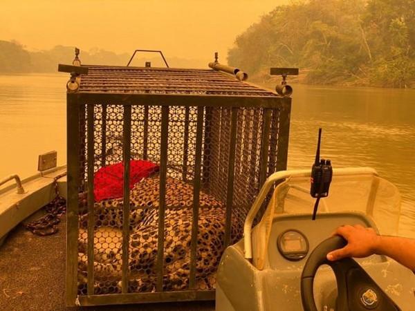 """2 8 - Veterinário descreve o árduo trabalho de mais de 12h  para resgatar animais no Pantanal: """"Ainda não é suficiente"""""""