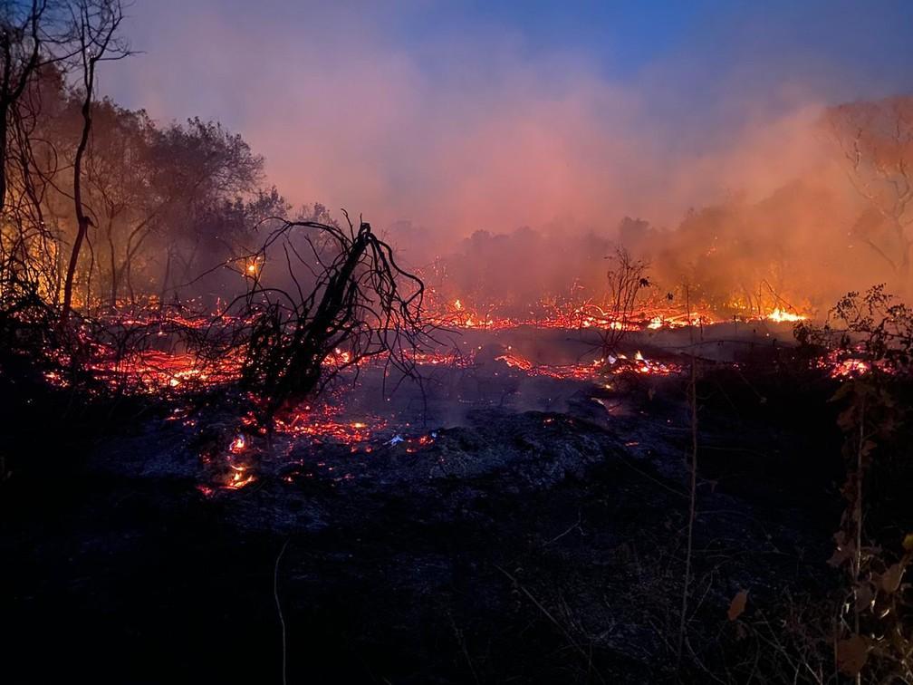 """3 - Veterinário descreve o árduo trabalho de mais de 12h  para resgatar animais no Pantanal: """"Ainda não é suficiente"""""""