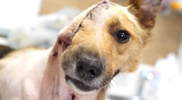 4 7 - Cachorrinho que perdeu parte do rosto, ganhou uma nova chance de ser Feliz