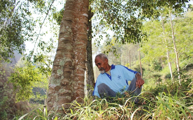 Pak Sadiman dan pohon beringin yang ia tanam di hutan Gunung Gendol - Um avô de 68 anos plantou cerca de 11.000 árvores para trazer água de volta para a floresta