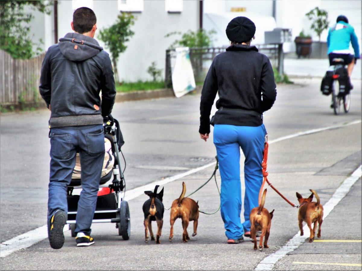dog house 3373734 1280 1 scaled - No México, eles propõem 4 anos de prisão para quem maltrata animais. Mais um passo em direção ao respeito