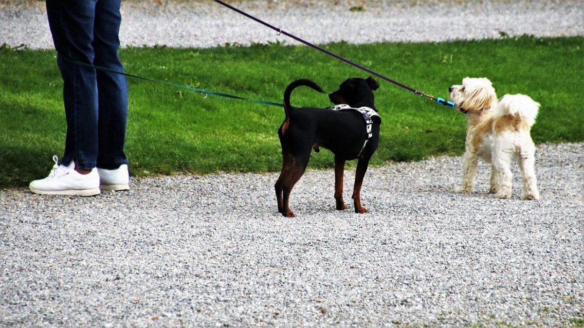 dog house 3373784 1280 scaled - No México, eles propõem 4 anos de prisão para quem maltrata animais. Mais um passo em direção ao respeito