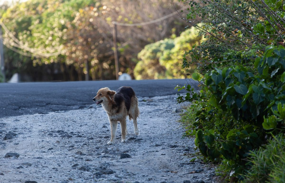 stray dog on road 4518690 1280 1 scaled - No México, eles propõem 4 anos de prisão para quem maltrata animais. Mais um passo em direção ao respeito
