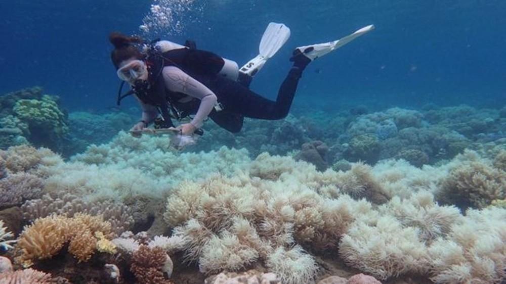 barreira de corais - Príncipe William cria prêmio global milionário por soluções criativas para o meio ambiente