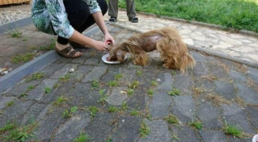 cao de rua conhecido como assustador e resgatado e transformado pelo amor de pessoas gentis2 - Cãozinho de rua foi resgatado, cuidado e amado. Ficou tão lindo nem parece o mesmo!