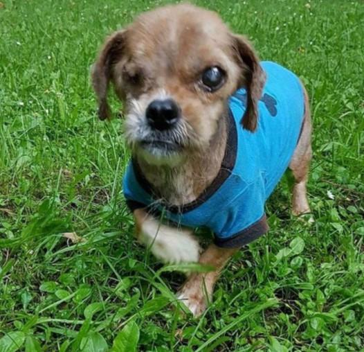 cao de rua conhecido como assustador e resgatado e transformado pelo amor de pessoas gentis4 - Cãozinho de rua foi resgatado, cuidado e amado. Ficou tão lindo nem parece o mesmo!