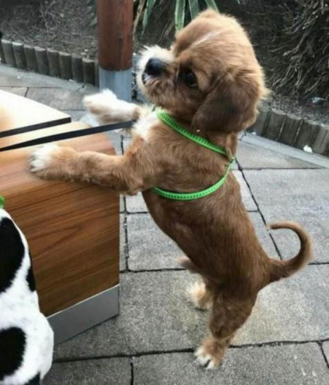 cao de rua conhecido como assustador e resgatado e transformado pelo amor de pessoas gentis6 - Cãozinho de rua foi resgatado, cuidado e amado. Ficou tão lindo nem parece o mesmo!