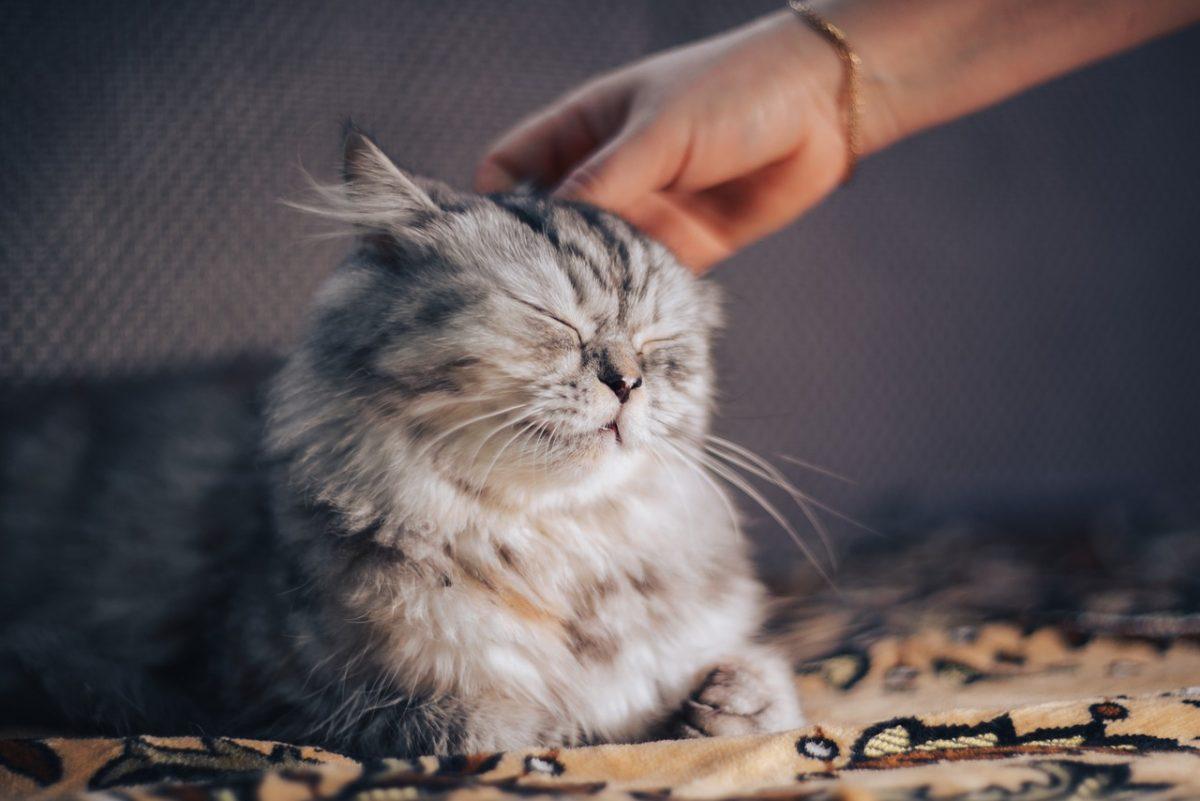 cat 5031733 1280 scaled - Conforme estudo, os gatos imaginam que somos pais deles.
