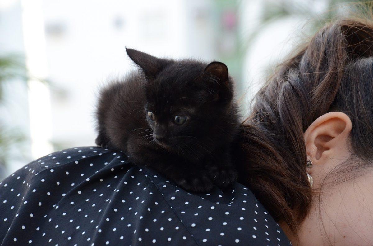 kitten 1739239 1280 scaled - Conforme estudo, os gatos imaginam que somos pais deles.