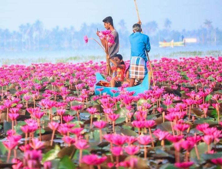 4 7 - Na Índia, esse rio foi tingido de rosa pelo repentino crescimento de flores. Uma paisagem excepcional