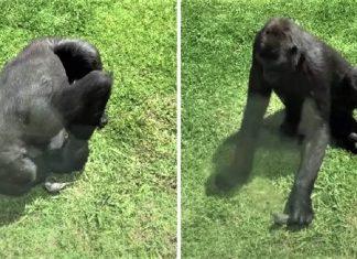 Capa Fondo gorila pajaro ayuda 1024x533 1 324x235 - Início
