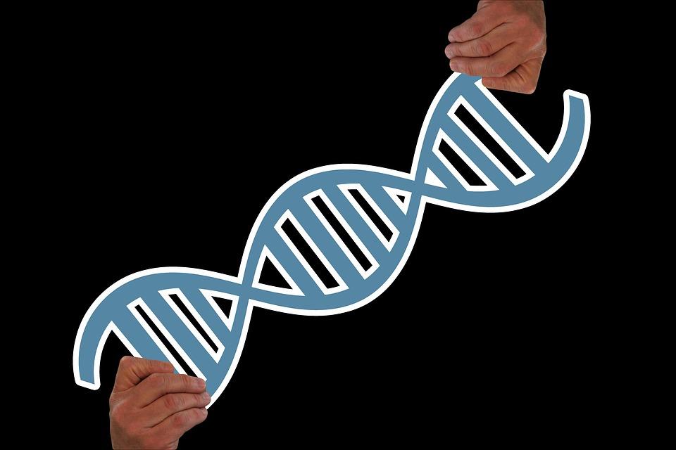 hand 3839218 960 720 - Em Israel, pesquisadores encontraram uma maneira de reverter o envelhecimento humano. A terapia dura apenas 3 meses