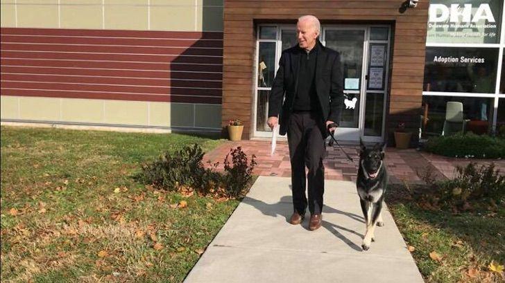 rescue dog joe biden white house 4 5fa8f4a8e33a6  700 - Cachorro abandonado vai morar na Casa Branca com o Presidente Joe Biden