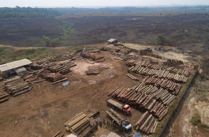 Captura de Pantalla 2020 12 02 a las 11.43.53 - A Amazônia brasileira perdeu cerca de 626 milhões de árvores.