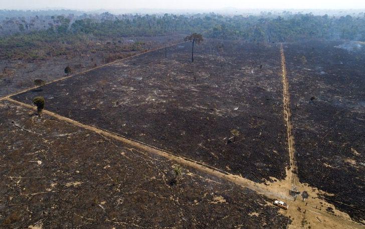 Captura de Pantalla 2020 12 02 a las 11.44.11 1 - A Amazônia brasileira perdeu cerca de 626 milhões de árvores.