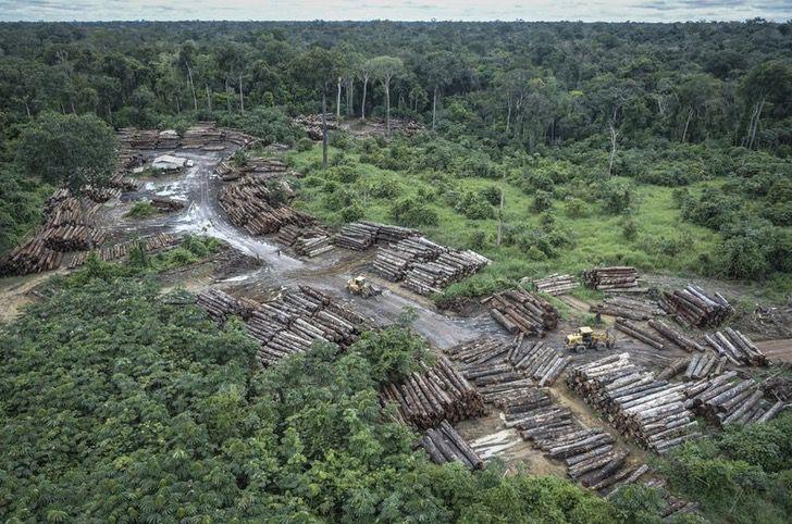 Captura de Pantalla 2020 12 02 a las 11.46.42 - A Amazônia brasileira perdeu cerca de 626 milhões de árvores.