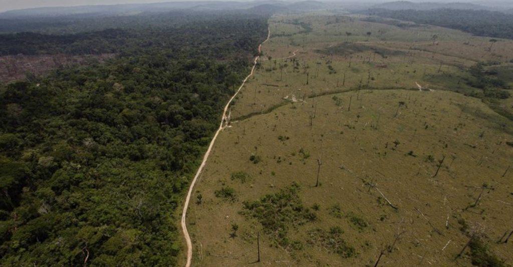 brasil deforestacion medioambiente 1024x533 1 - A Amazônia brasileira perdeu cerca de 626 milhões de árvores.