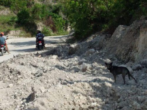 """cao bebe moto 4 e1609851182903 - Cachorro late """"avisando"""" e motociclista salva um bebê abandonado próximo ao lixão"""