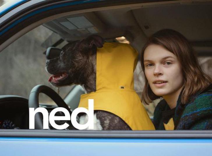 1 1 - A Zara lança sua primeira coleção de roupas exclusivas para cães. Eles também serão ícones da moda