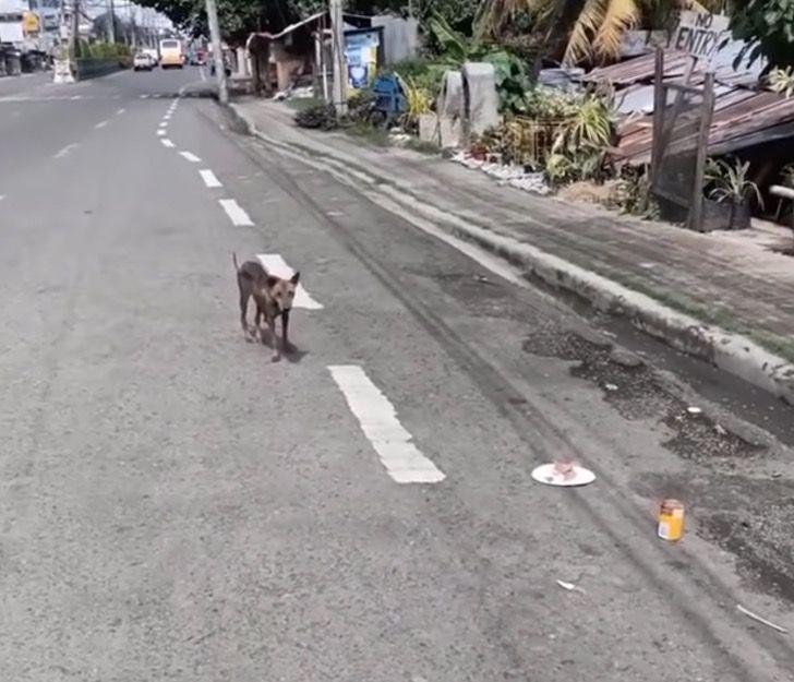 1 - Espancada, grávida e deitada na estrada, cachorrinha lutou para sobreviver e teve um final feliz (Vídeo)