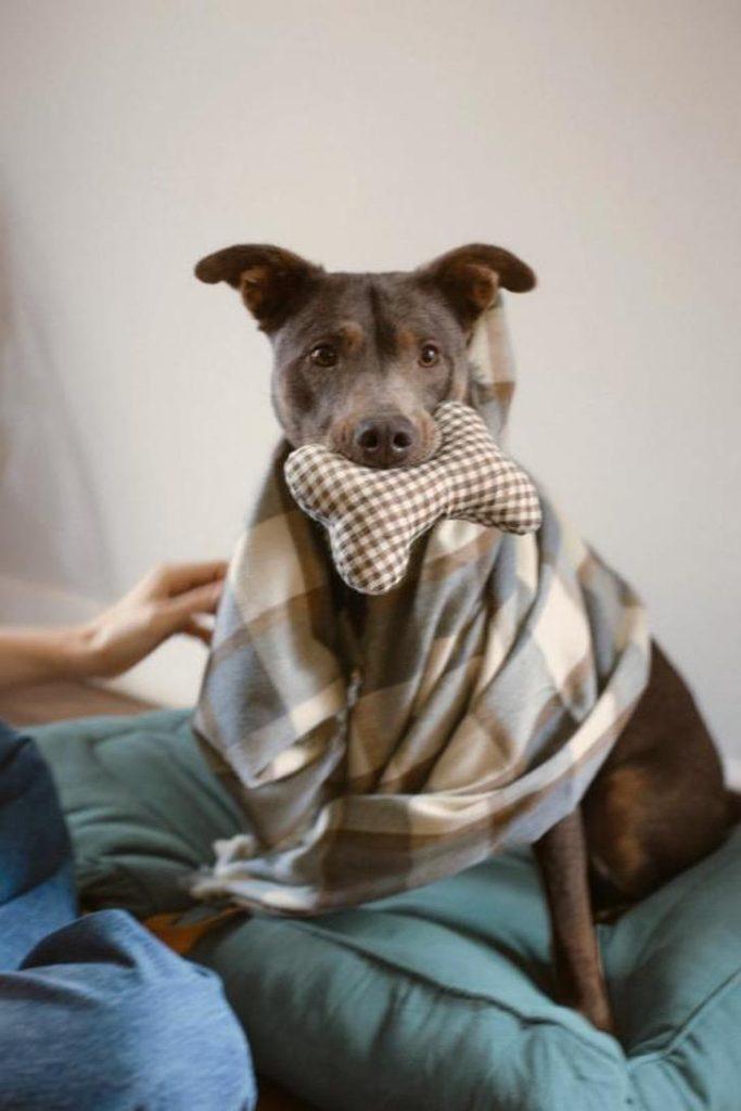 2 1 - A Zara lança sua primeira coleção de roupas exclusivas para cães. Eles também serão ícones da moda