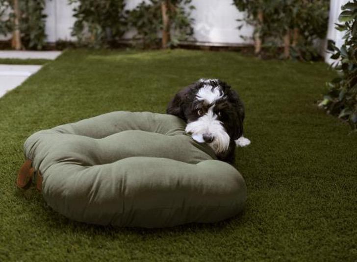 4 2 - A Zara lança sua primeira coleção de roupas exclusivas para cães. Eles também serão ícones da moda