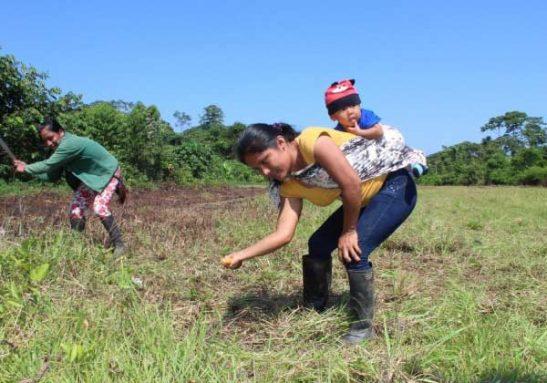 a - Mulheres indígenas plantaram 150 mil árvores na Amazônia