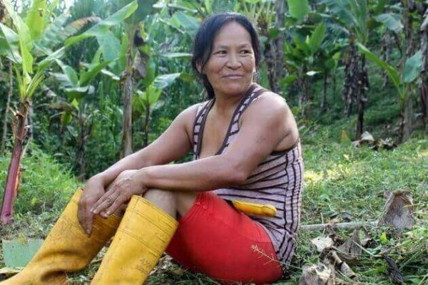 b - Mulheres indígenas plantaram 150 mil árvores na Amazônia