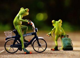 frogs 1701048 1280 324x235 - Início